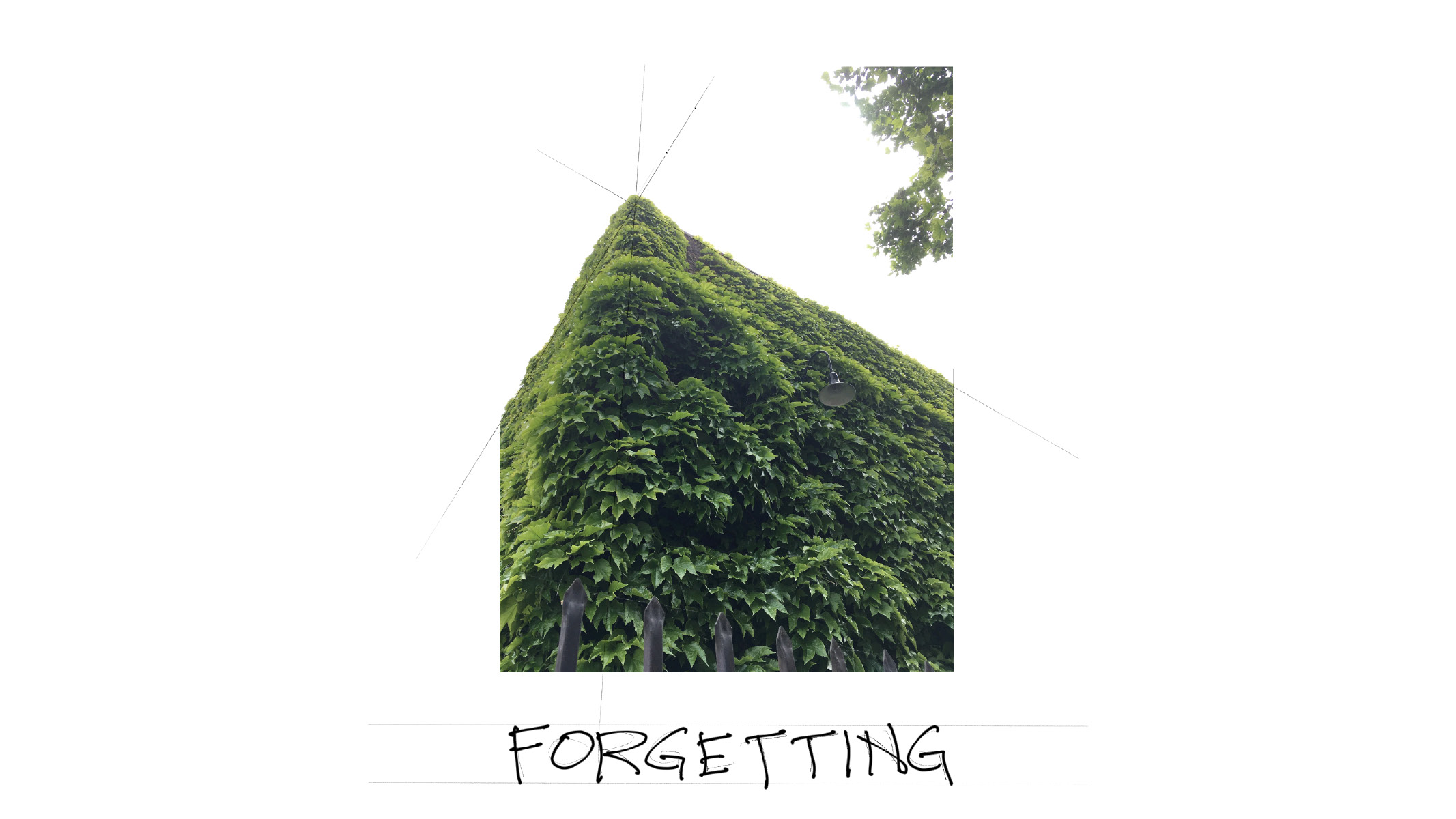 Flashcard: Forgetting